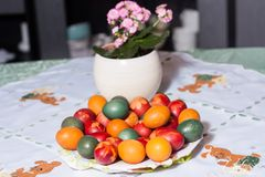 Coloring easter eggs in natural dyes royalty free stock photo