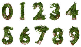 All numbers constructed from vines and leaves Stock Images