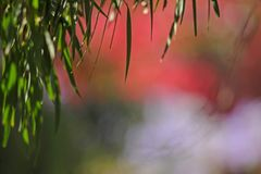 Wonderful Diffused Bokeh Colour Combinations, Predominatly Pink, Blue and Green. All Out of Focus, Except a few leaves, Marvelous Blend of Colours, Bokeh stock photo