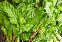All over composition of healthy, dark, leafy greens. A pile of bright green freshly picked greens with stems including Swiss chard, beet greens and arugula Stock Photography