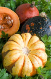 All pumpkin Royalty Free Stock Photography