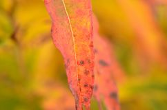 All rainbow colour on plant in autumn nature Stock Images