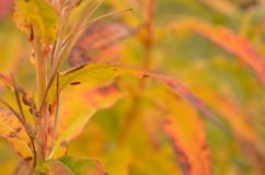 All rainbow colour on plant in autumn nature Royalty Free Stock Image
