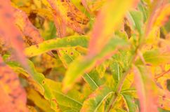 All rainbow colour on plant in autumn nature Royalty Free Stock Photos