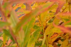 All rainbow colour on plant in autumn nature Stock Photography