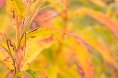 All rainbow colour on plant in autumn nature Royalty Free Stock Photography