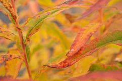 All rainbow colour on plant in autumn nature Royalty Free Stock Images