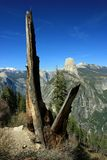 All that Remains. Lightning torched tree on Panorama trail, Yosemite national park, california Stock Photos