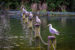 All in a row Royalty Free Stock Photography