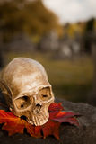 All Saint's skull in autumn Royalty Free Stock Photos