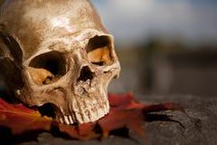 Free All Saint S Skull On A Tomb Stock Photos - 15930423