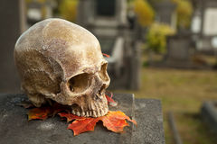 All Saint's skull on a tombstone Royalty Free Stock Photography