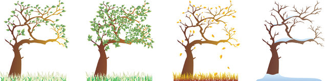 All seasons. A vector illustration of four season trees Vector Illustration