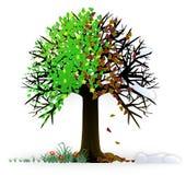All seasons tree Royalty Free Stock Photo