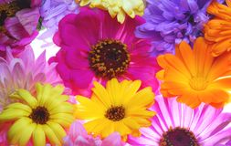 All sort color flowers Stock Photos