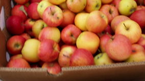 All sorts of apples stock video