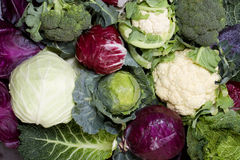 All sorts of cabbage Royalty Free Stock Photos