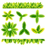 All sorts of green leaves. From trees and shrubs isolated on white background Royalty Free Stock Photography