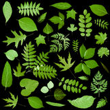 All sorts of green leaves Royalty Free Stock Photography