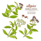 All spice vector set. All spice plant vector set on white background Royalty Free Stock Images