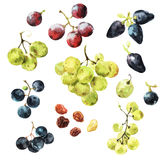 All Sweet and Mighty Grapes Royalty Free Stock Image