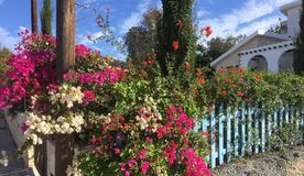 All things bright and beautiful. A Mediterranean garden Royalty Free Stock Photo