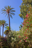 All trees in the gardens of the Real Alcazar of Seville Royalty Free Stock Photos