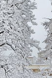 All vit under snö, vinterlandskap på träd som täckas med tung snö Royaltyfri Fotografi