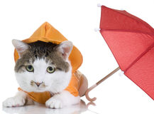 All-Weather Cat Stock Images