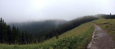 Alla cima della montagna delle alci Immagine Stock