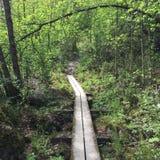 Alla foresta Fotografie Stock Libere da Diritti