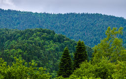 Alla gräsplaner av Kaukasus Fotografering för Bildbyråer