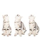 Alla katter som ser upp Royaltyfria Foton
