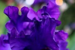 Alla kronblad i en rufsa Royaltyfri Foto