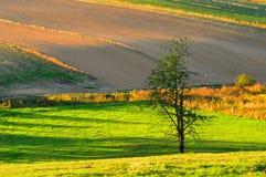 Alla luce di autunno Fotografia Stock Libera da Diritti