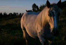 Alla luce di tramonto Fotografia Stock