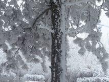 alla några individuella objekt för elementillustrationen skalar formatsnow till treevektorn Arkivfoton
