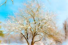 alla några individuella objekt för elementillustrationen skalar formatsnow till treevektorn Royaltyfri Fotografi