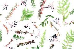alla några objekt för den blom- illustrationen för höstbakgrundselement individuella skalar formattexturer till vektorn Arkivfoton