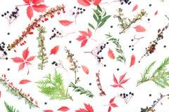 alla några objekt för den blom- illustrationen för höstbakgrundselement individuella skalar formattexturer till vektorn Arkivbilder