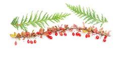 alla några objekt för den blom- illustrationen för höstbakgrundselement individuella skalar formattexturer till vektorn Royaltyfria Bilder