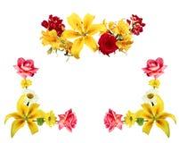 alla några objekt för den blom- illustrationen för sammansättningselement individuella skalar formattexturer till vektorn blommor Royaltyfri Fotografi