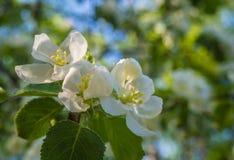 Alla vårblom Royaltyfria Foton