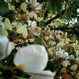Alla vi är som blommor Royaltyfria Bilder