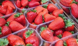 alla vita mogna jordgubbar för bakgrundsfine Royaltyfri Bild