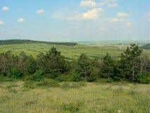 Allah Bair. Pine forest, Allah Bair hill, Constanta County, Romania Royalty Free Stock Photography