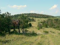 Allah Bair. Pine forest, Allah Bair hill, Constanta County, Romania Stock Images