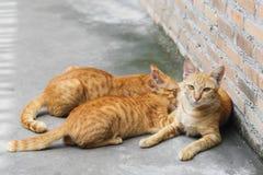 Allaiter de chat image libre de droits