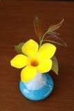 Allamanda no vaso azul Imagens de Stock Royalty Free