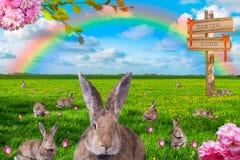 Alldeles av kaniner med målade påskägg på grön äng med regnbågen i bakgrunden arkivfoton